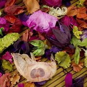 How to Dry Flowers in a Dehydrator | eHow