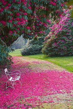 magnifique paysage en fleurs