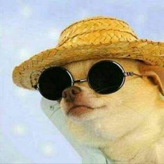 Dog wearing sunglasses and hat http://ift.tt/2pSWKIr