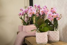 Miniature Orchids, Shops, Phalaenopsis Orchid, Zinnias, Beautiful Gardens, Indoor Plants, Planter Pots, Romantic, Jewellery