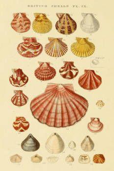 Vintage Shell Print
