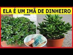 33 Pergola Ideas to Keep Cool This Summer Herb Garden, Home And Garden, Jade Plants, Maria Jose, Keep Cool, Succulents Garden, Feng Shui, Agriculture, Aloe Vera