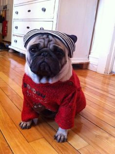 I hate winter. (love me some pugs)