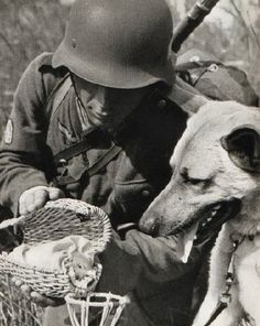 El soldado, el perro y la paloma?