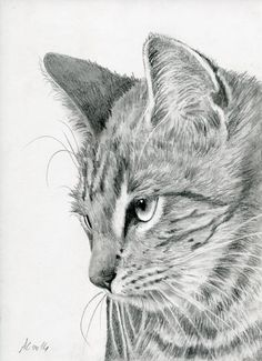 Pencil Portrait Mastery - Tiger Cat by art-it-art. on Bleistift Zeichnung auf 200 Gramm Künstlerpapier.Format: 18 x 25 cm - 7 x 10 inches - Discover The Secrets Of Drawing Realistic Pencil Portraits Animal Sketches, Animal Drawings, Pencil Drawings, Art Sketches, Drawing Animals, Portrait Au Crayon, Pencil Portrait, Art It, Cat Embroidery