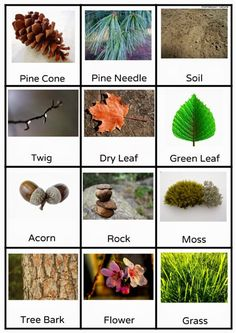 Free Outdoor Scavenger Hunt Printable by Anastasia from Montessori Nature at Childhood 101 Gross Motor Activities, Nature Activities, Montessori Activities, Autumn Activities, Gross Motor Skills, Learning Activities, Preschool Activities, Therapy Activities, Physical Activities