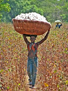 Ramasseuse de coton, vers Houet, Burkina Faso