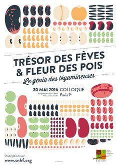 Trésor des fèves et fleur des pois, le génie des légumineuses - SNHF - Société Nationale d'Horticulture de France