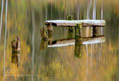 by fotoprofilgr 500px осень озеро природа отражение осенний лес лесное озеро остатки моста бревна в воде