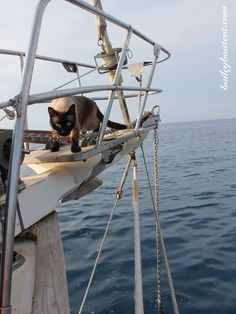 Q: Who makes better sailors, cats or humans? | Set sail with Bailey Boat Cat