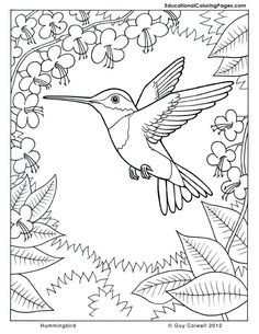 coloring pages hummingbirds | Hummingbird coloring, flower coloring, nature coloring pages