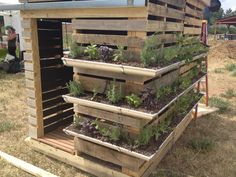 Great idea for a garden shed or retreat made from pallets. My son gets a play place and I get my herb gardens. - Great idea for a garden shed or retreat made from pallets. My son gets a play place and I get my herb gardens. Herb Garden Pallet, Gutter Garden, Herbs Garden, Garden Path, Easy Garden, Vegetable Garden, Chicken Coop Pallets, Chicken Coops, Diy Gutters