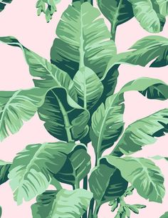 Pacifico Palm Wallpaper - Pink