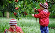 Visit a cherry orchard, travel to a dairy or catch a fish! Check out our favourite Victorian farms to visit to see where food comes from! Cherry Farm, Knitted Hats, Crochet Hats, Fruit Picking, Farm Shop, School Holidays, Melbourne, Activities For Kids, Winter Hats