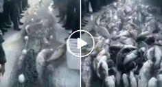 """Pescadores Arrastam Rede """"Sem Fim"""" De Enorme Quantidade De Peixes De Lago Congelado"""