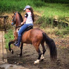 Trovador de la Bonita #TrotonGalopero #Trovador #TrovadorDeLaBonita #Caballo #Horse