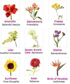 Flowers and their meanings. I love the language of flowers!