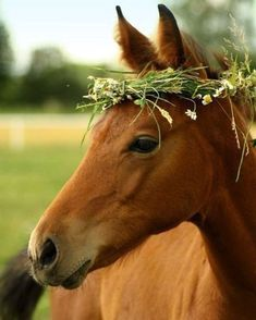 Such an angel  #horsephtography by @horses.best . .  Follow us @equestrianbootsandbridles for more #horsesofinstagram & #horselifestyle