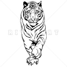 Mascot Clipart Image of A Realistic Tiger Graphic http://www.rivalart.com/cart/pc/viewCategories.asp?idCategory=102&opid=5