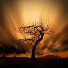 silhouette against sunset skies