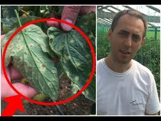 Cabbage, Solar, Home And Garden, Gardening, Vegetables, Youtube, Home, Plant, Lawn And Garden