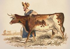 brown and white cow drawing