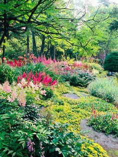 Stunning Shade Garden Design Ideas Shade - Plant en Masse - Plant en Masse Just about every type of plant looks better in large groupings than it does planted individually. Here, drifts of astilbe seem to tower out of a groundcover of golden sedum. Garden Cottage, Diy Garden, Shade Garden, Dream Garden, Garden Plants, Garden Beds, Succulent Gardening, Summer Garden, Colorful Plants