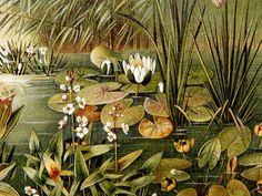 Stampe antiche 1897 di piante acquatiche, ninfee. Waterlily. Stampa Botanica. Litografia splendida età di 120 anni.