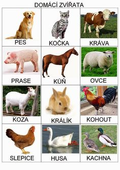 Pro Šíšu: Zvířata Animal Activities, Montessori Activities, Book Activities, Animal Pictures For Kids, Animal Crafts For Kids, Preschool Themes, Preschool Crafts, Farm Animals, Animals And Pets