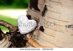 heart and birch - stock photo