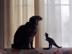 Cat and T-rex ( I think ) - Imgur