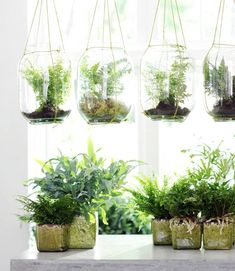 Wer Farn besonders arrangieren möchte, läst ihn von der Decke hängen. In einem großen Glasgefäß und mit Moos drapiert, sehen Ihre Pflanzen sensationell gut...