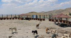 Kayseri Büyükşehir Belediyesinden Köpek Barınma Evleri