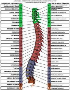 Fitness About Me Medicine Notes, Medicine Student, Hata Yoga, Spine Health, Medical Anatomy, Body Anatomy, Holistic Medicine, Anatomy And Physiology, Chinese Medicine