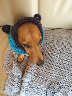 Bruce in his snood...made for an adorable dachshund from Buttercup crochet designs