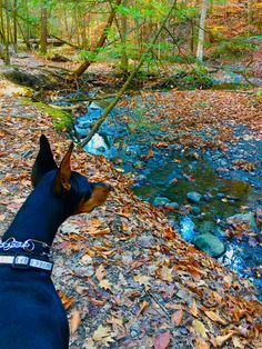 Checking out the creek