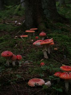 In the mushroomforest by Emelie Petersson