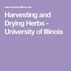 Harvesting and Drying Herbs - University of Illinois
