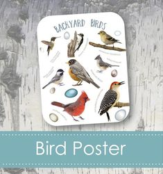 Bird Art Poster Bird Identification, Common Birds, Bird Poster, Bird Aviary, Montessori Toddler, Goldfinch, Backyard Birds, Creative Thinking, Bird Art