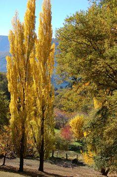 Fotos de Otoño en San Martín de los Andes: Imágenes del otoño