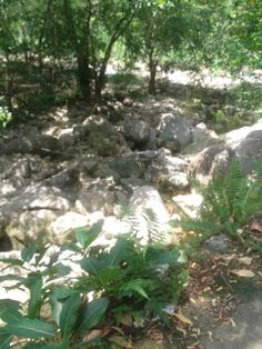 Cachoeira localizada em Andorinhas, na cidade de Magé, RJ