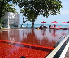 What? A red pool? Yeah, I like things that are different...but would people freak out at the red? Hmmm. A good conversation piece! via Pinerly - your Pinterest friendly dashboard: http://www.pinerly.com/i/7Rzu2