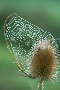 Spiders webbs