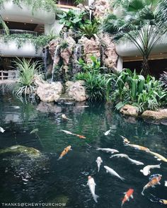 Experience the elegance of our koi fish pond amidst the lush greenery of our urban oasis in Singapore. When can we expect you? @shangrilasg 📷: @chewyourchow.  #Shangrilahotels #Shangrilasingapore #Shangrila #singapore #greenery #beautifulhotels #oasis #view #travel #vacation #wanderlust #adventure #travelgram #instatravel #travelphotography