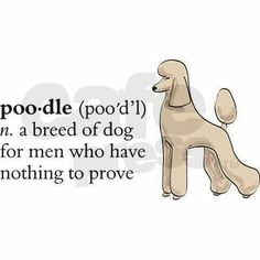 """""""Poodle: a breed of dog for men who have nothing to prove."""" Indeed! #poodle"""