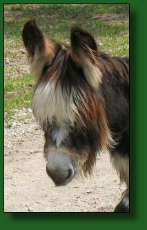 donkeys@donkeys.net a sign of a really cold winter it just came out of!~