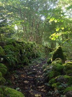 Chemin de randonnée #Auvergne