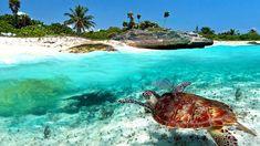"""""""SOL Y AVENTURA EN RIVIERA MAYA""""...   La Riviera Maya, en nuestro hermoso Caribe Mexicano, es uno de los mejores destinos del mundo. Lo tiene todo: sol y aguas transparentes en la playa, aventura en la selva, ruinas arqueológicas, ciudades coloniales, gastronomía de primera calidad. ..."""