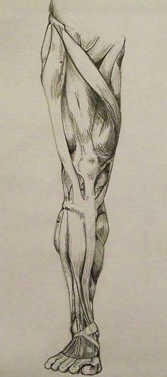 Pencil on Card, 'Anatomical Study.'