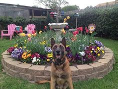 K9 Max - E.O.W. 7 April 2017 My condolences to the Fayetteville Police Department and Retired Sgt. Campbell in their loss of K9 Max. Thank you K9 Max for your service. You are a HERO - Run free Warrior boy - You have earned your wings. On Friday, April 7th Retired Sgt Campbell assisted K9 Max with crossing over the Rainbow Bridge at 15 years old. K9 Max served as the city's explosive K9 from 2004 to 2014. K9 Max retired in 2014 where he lived with Sgt Campbell in the life of luxury.